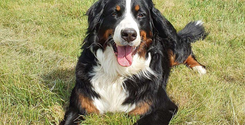 Angebot Unsere Hundepauschale